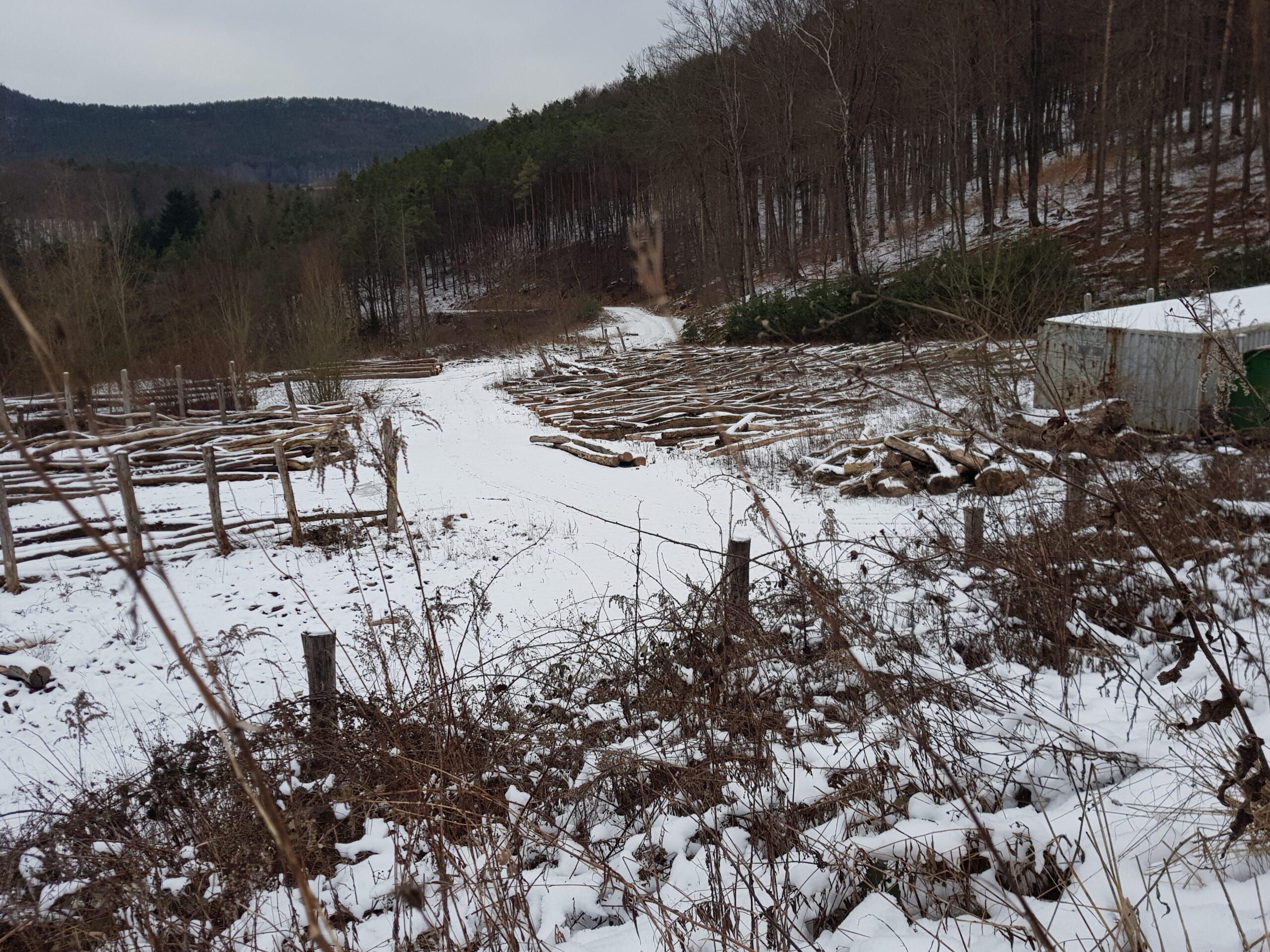 Holzlagerplätze sind notwendig. Trifels Natur GmbH lässt Angelegenheit vor dem Verwaltungsgericht prüfen