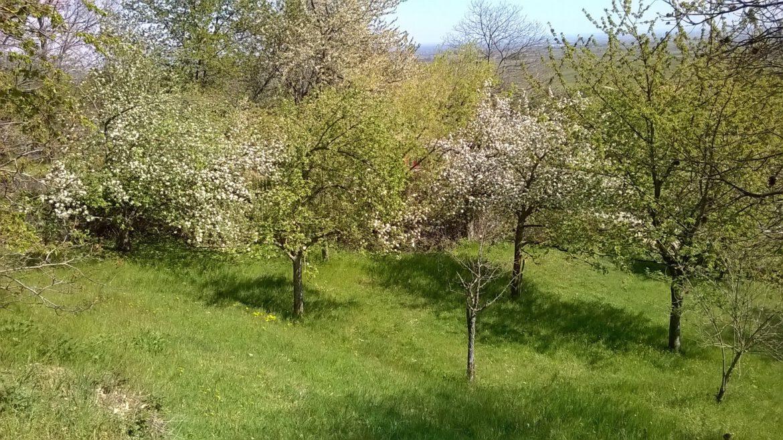 Tag der Streuobstwiese am 30. April.Landrat begrüßt Aktionstag