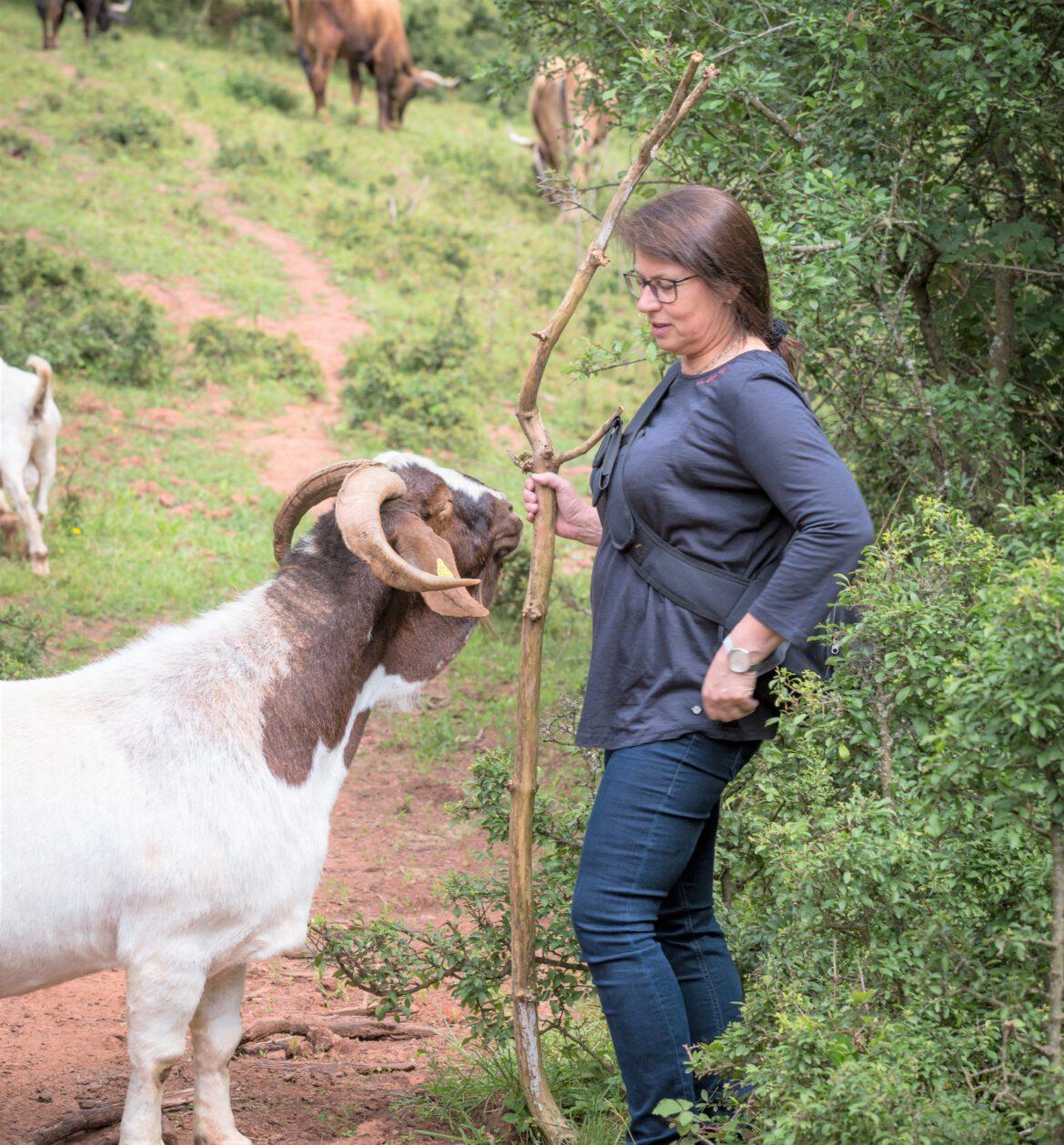 Gräfenhausener Beweidungsprojekt.Rinder, Ziegen und Esel pflegen die Natur