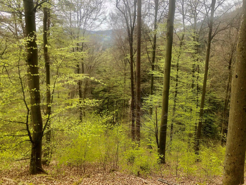 Verbandsgemeinde Landau-Land.Nachhaltige Forstwirtschaft.Die 11 Ortsgemeinden mit Waldbesitz erhalten Bundeswaldprämien.