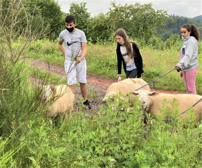 Der Natur auf der Spur.Germersheimer Schulklasse am Naturaktionstag in Eußerthal