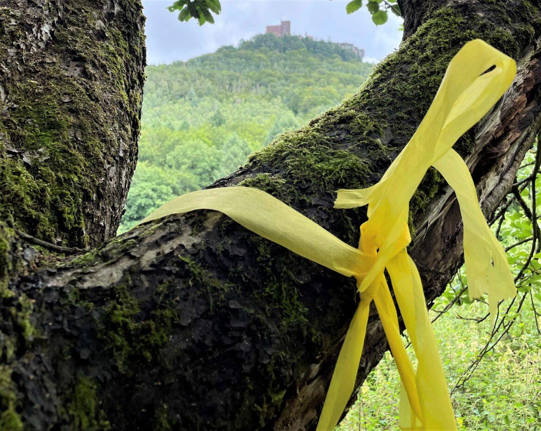 """Streuobst pflücken für den Eigenbedarf.Aktion """"gelbes Band"""" im Trifelsland"""
