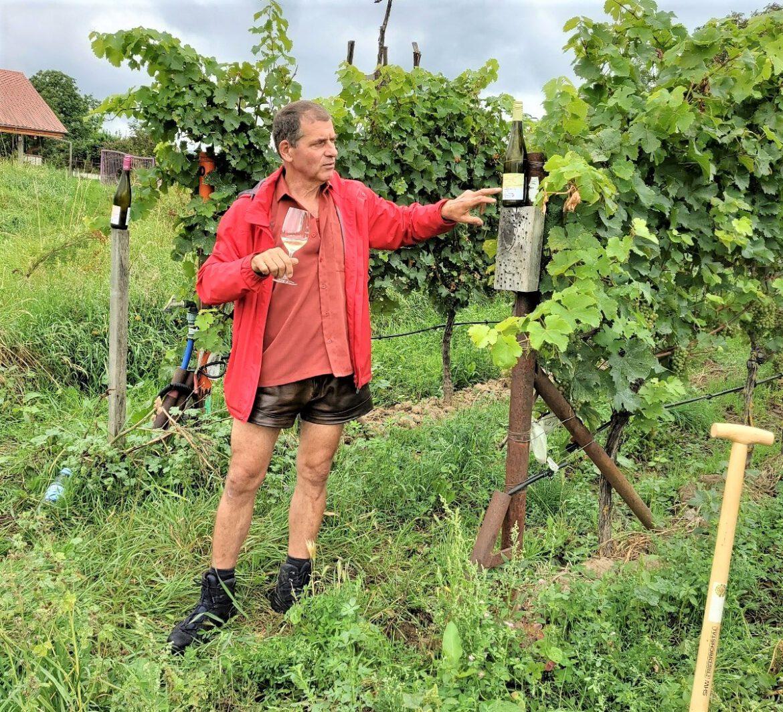 Alles ausser Grauburgunder.Ein eindrücklicher Besuch im Nußdorfer Bio-Weingut Rummel
