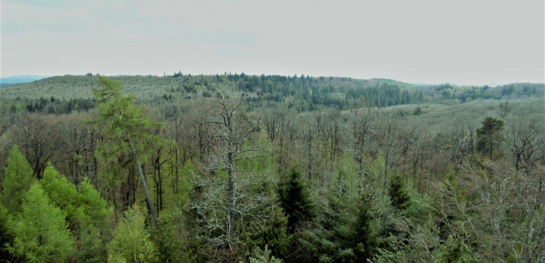"""Unterstützung der Privatwaldbesitzer bei Klimawandelanpassung.Ministerin Anne Spiegel (Grüne): """"Bedeutende Fähigkeiten des Waldes stärken"""""""
