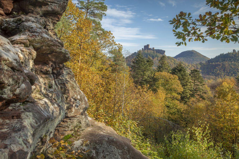 Wild und nachhaltig.Kulinarische Pfälzerwald-Wochen 15. bis 31. Oktober.In Partner-Restaurants des Biosphärenreservats